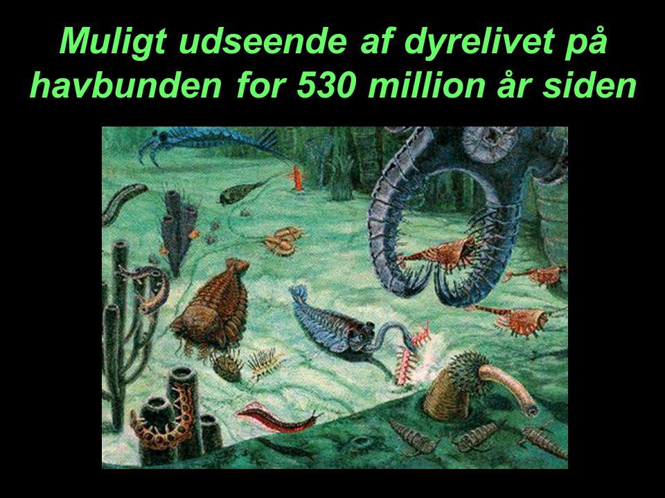 Muligt udseende af dyrelivet på havbunden for 530 million år siden
