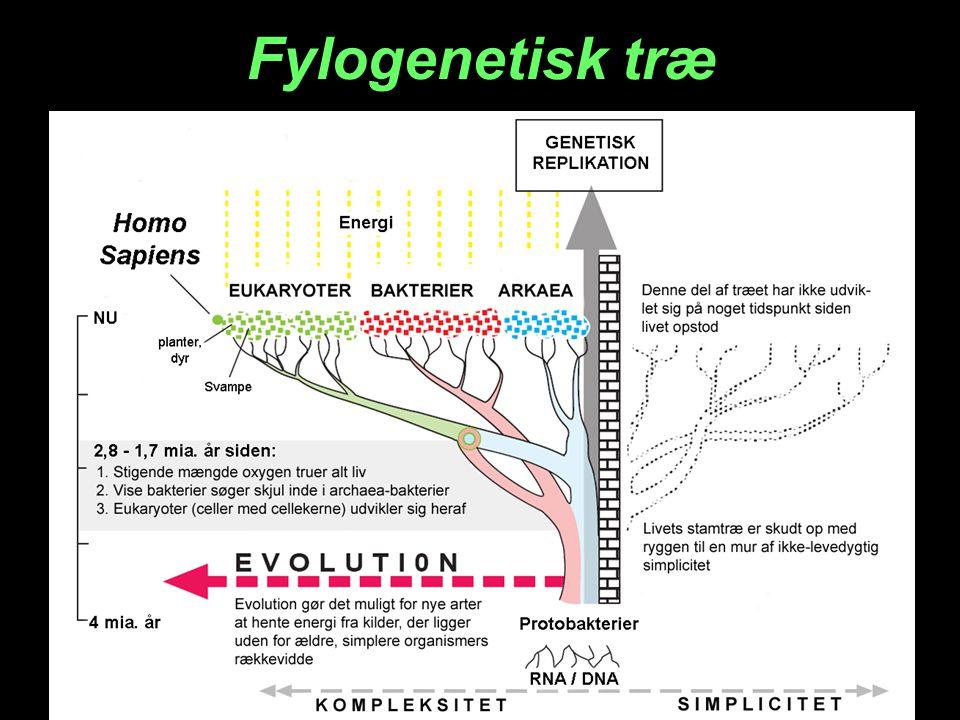 Fylogenetisk træ
