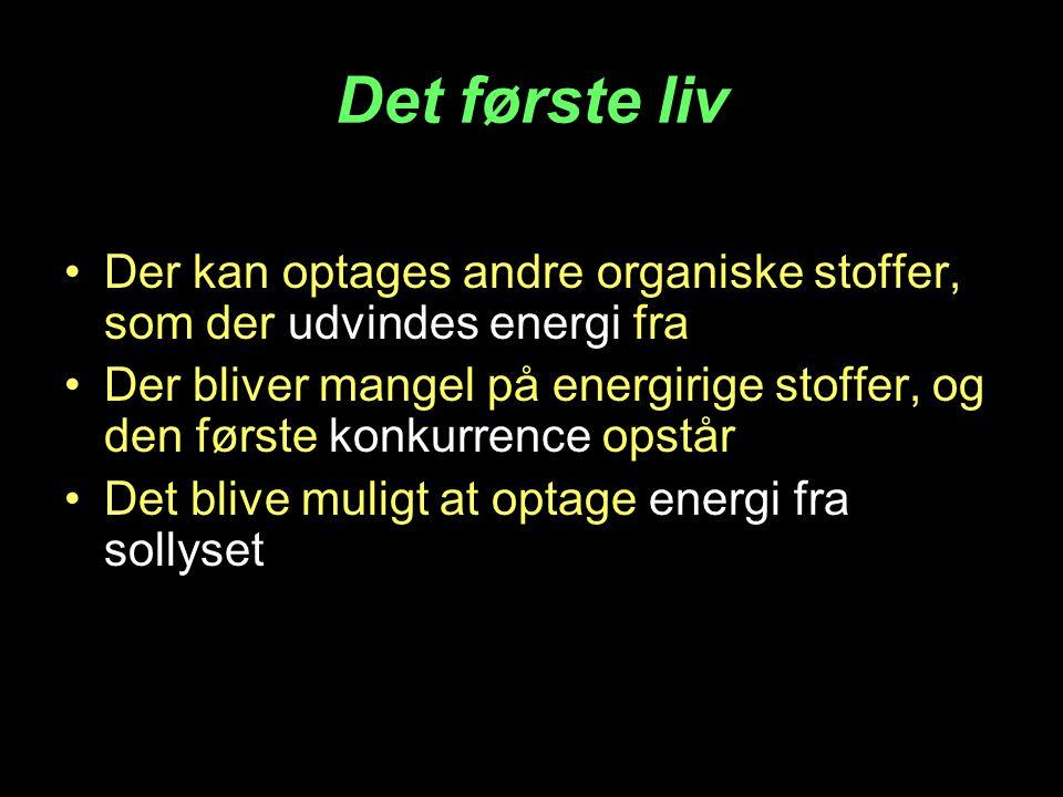 Det første liv Der kan optages andre organiske stoffer, som der udvindes energi fra.