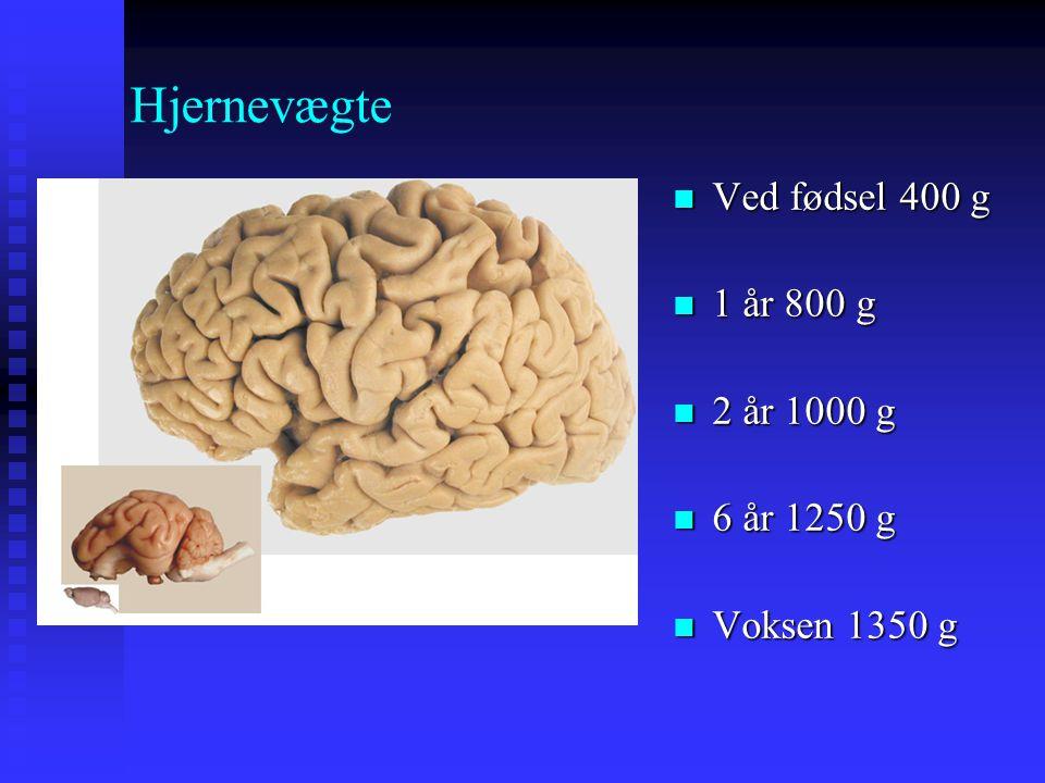 Hjernevægte Ved fødsel 400 g 1 år 800 g 2 år 1000 g 6 år 1250 g
