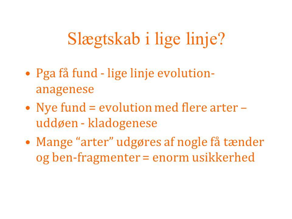 Slægtskab i lige linje Pga få fund - lige linje evolution-anagenese