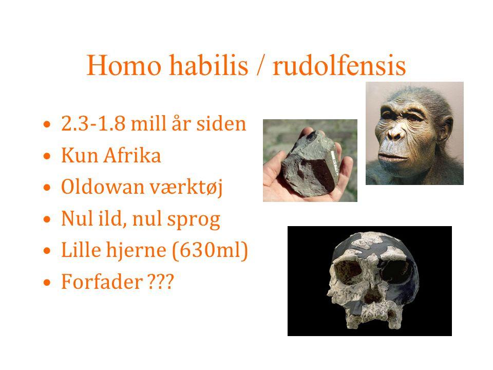Homo habilis / rudolfensis
