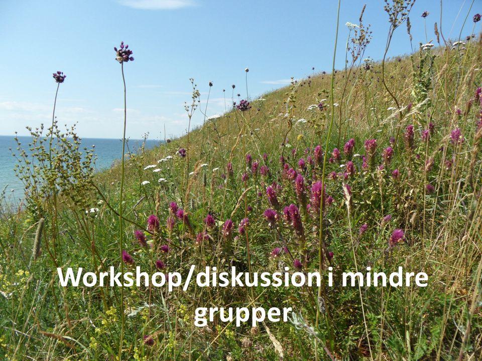 Workshop/diskussion i mindre grupper
