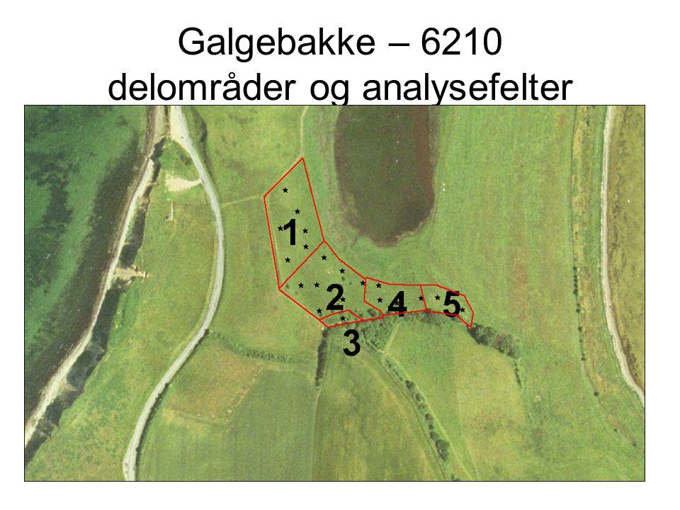Galgebakke – 6210 delområder og analysefelter