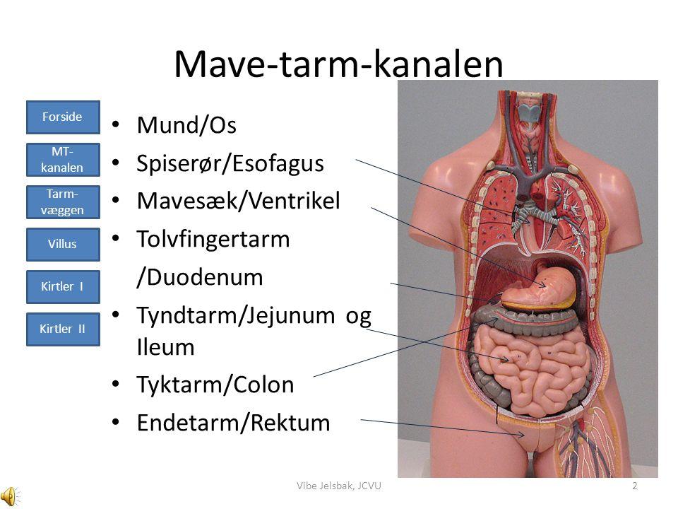 Mave-tarm-kanalen Mund/Os Spiserør/Esofagus Mavesæk/Ventrikel