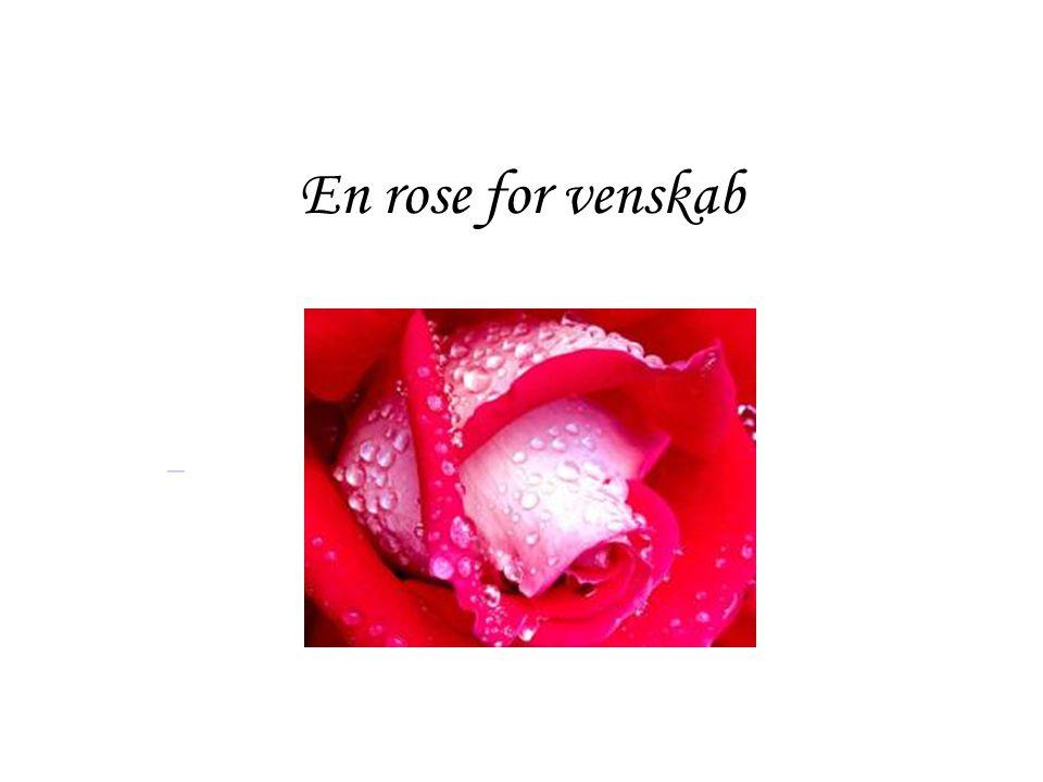 En rose for venskab