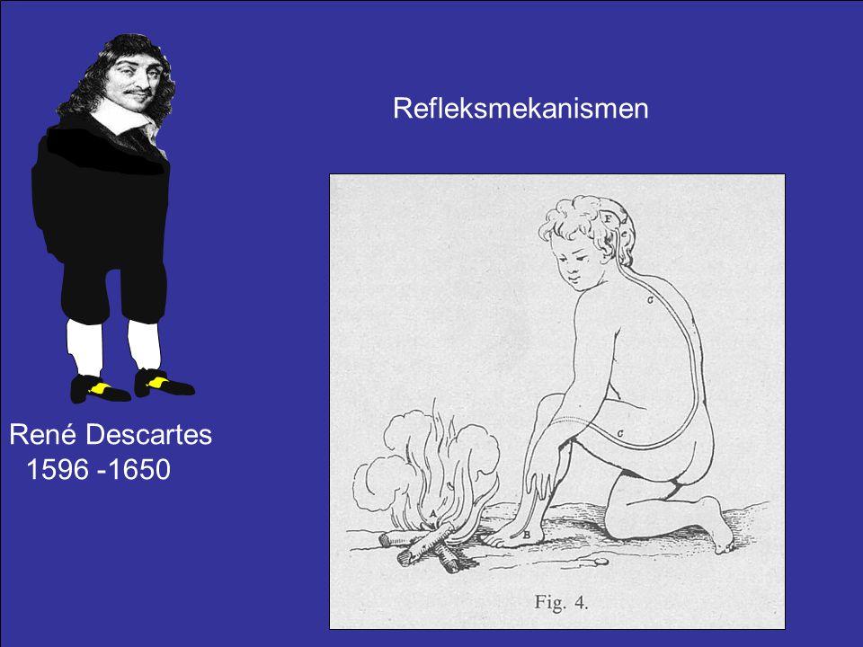 Refleksmekanismen René Descartes 1596 -1650
