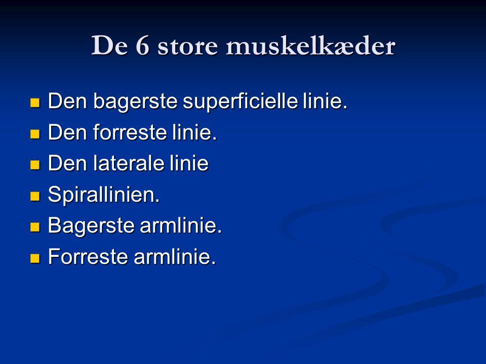 De 6 store muskelkæder Den bagerste superficielle linie.