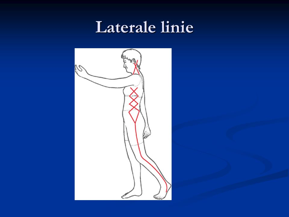 Laterale linie