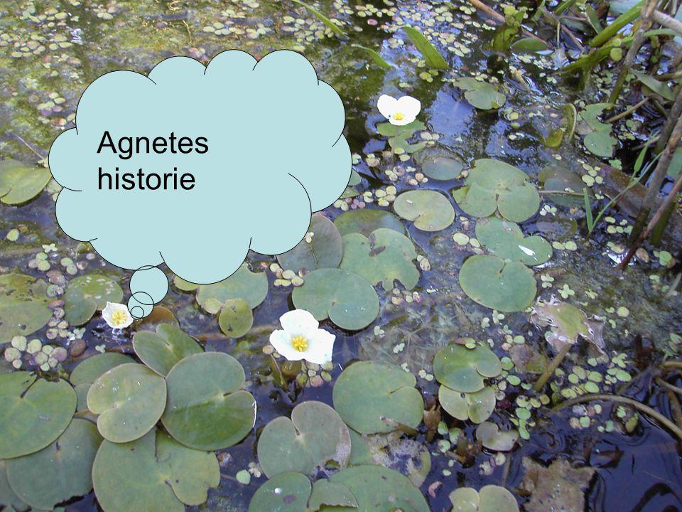 Agnetes historie