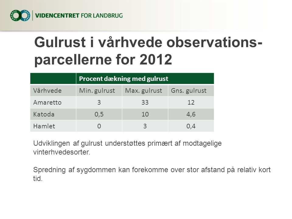Gulrust i vårhvede observations-parcellerne for 2012