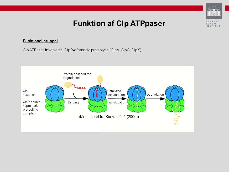 Funktion af Clp ATPpaser