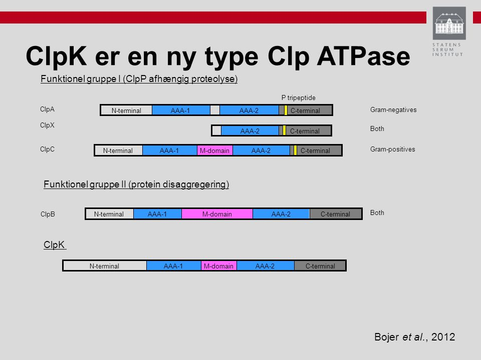 ClpK er en ny type Clp ATPase