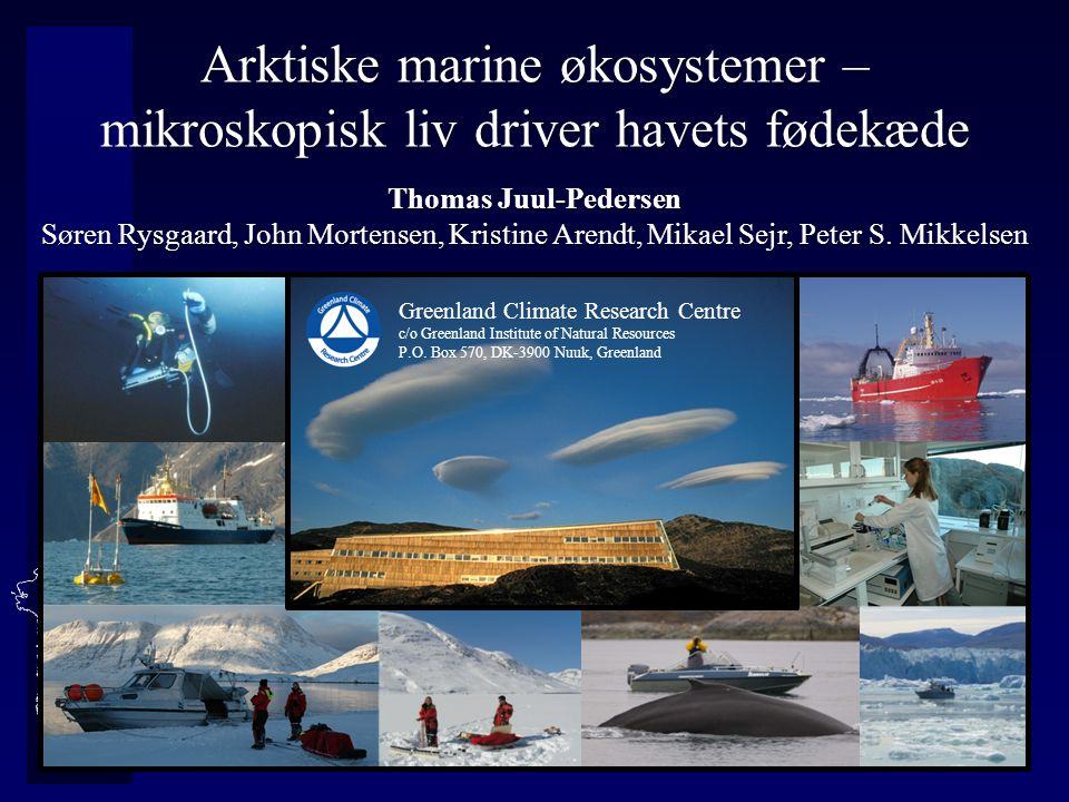 Arktiske marine økosystemer – mikroskopisk liv driver havets fødekæde