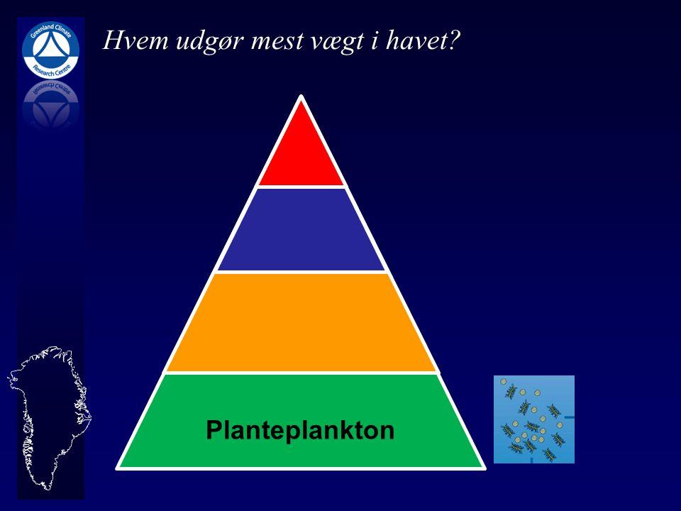 Hvem udgør mest vægt i havet