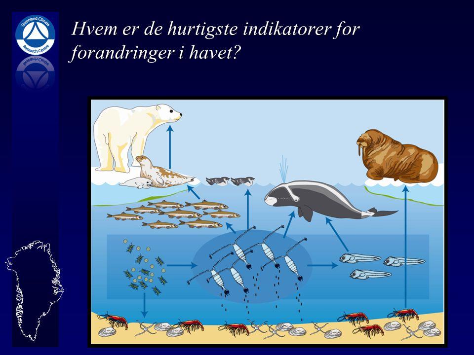 Hvem er de hurtigste indikatorer for forandringer i havet
