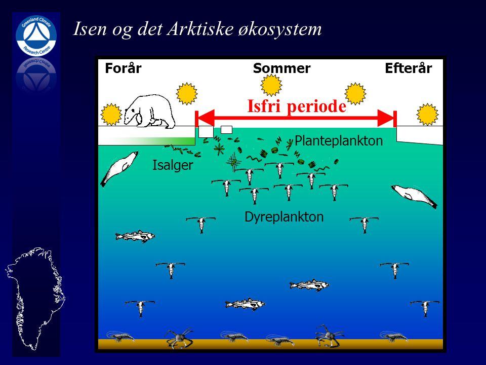 Isen og det Arktiske økosystem