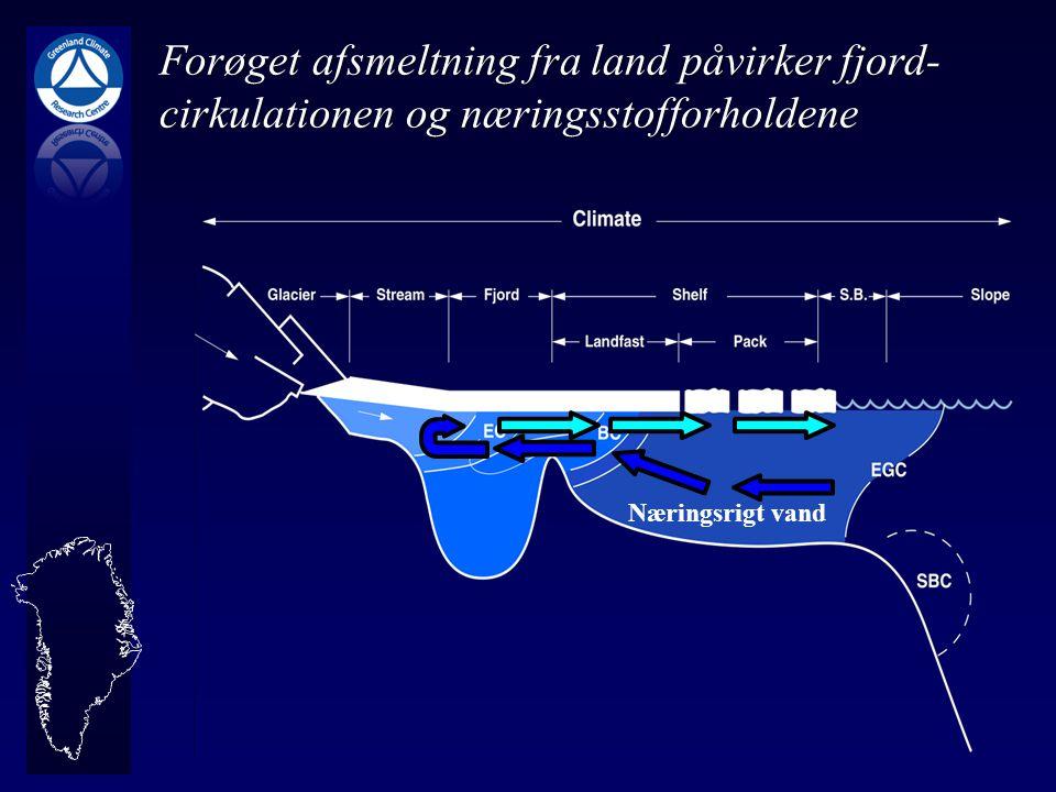 Forøget afsmeltning fra land påvirker fjord-cirkulationen og næringsstofforholdene