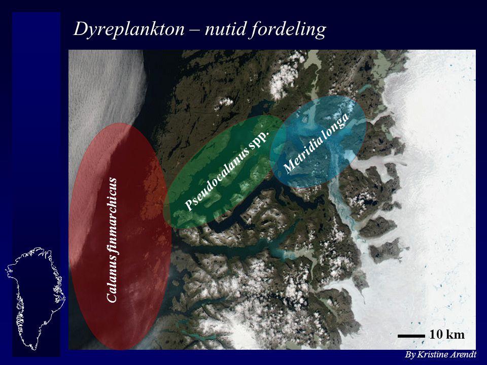 Dyreplankton – nutid fordeling
