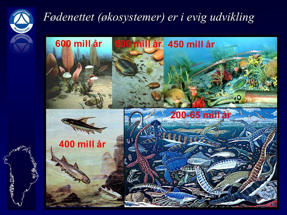 Fødenettet (økosystemer) er i evig udvikling