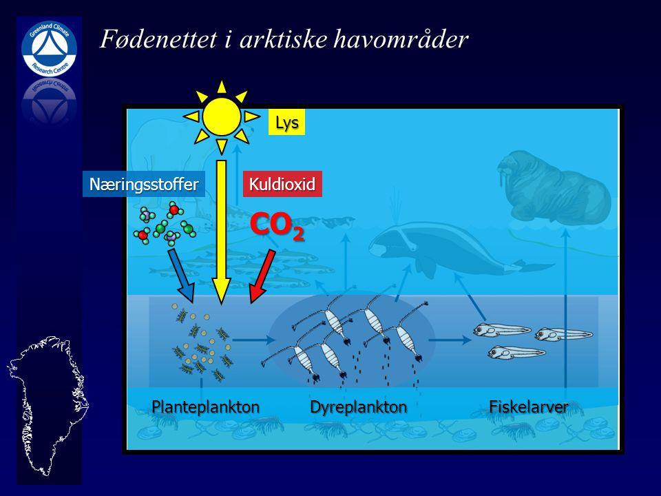 CO2 Fødenettet i arktiske havområder Lys Næringsstoffer Kuldioxid