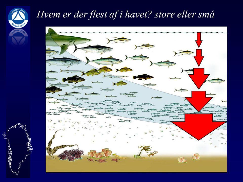 Hvem er der flest af i havet store eller små