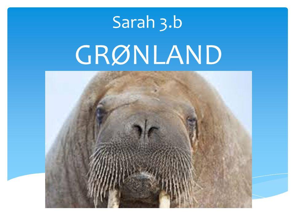 Sarah 3.b GRØNLAND