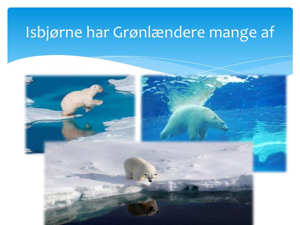 Isbjørne har Grønlændere mange af