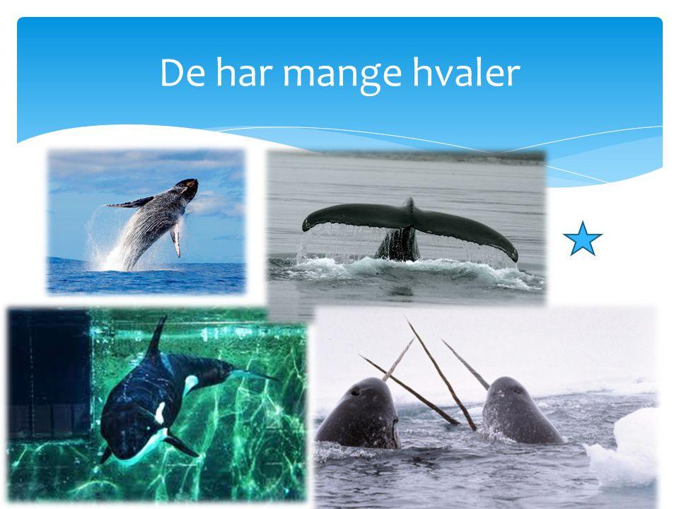 De har mange hvaler
