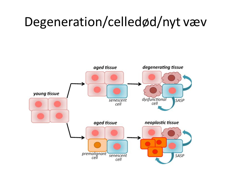 Degeneration/celledød/nyt væv