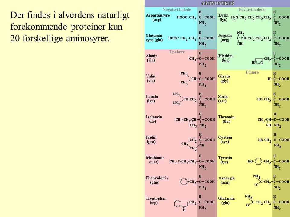 Der findes i alverdens naturligt forekommende proteiner kun 20 forskellige aminosyrer.