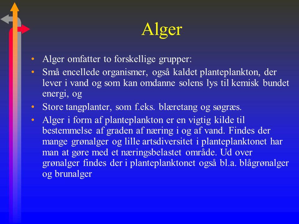 Alger Alger omfatter to forskellige grupper: