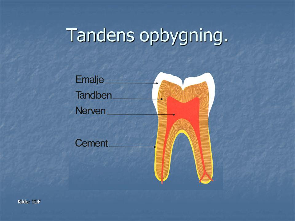 Tandens opbygning. Kilde: TDF