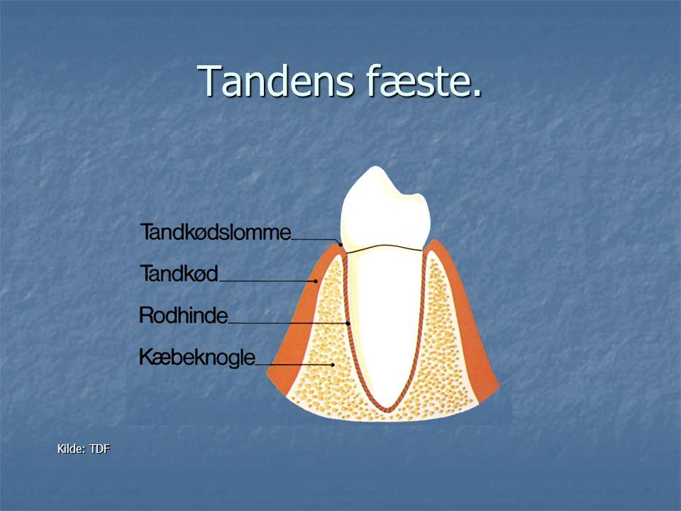 Tandens fæste. Kilde: TDF