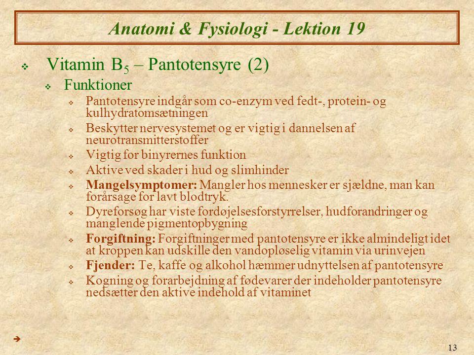 Anatomi & Fysiologi - Lektion 19