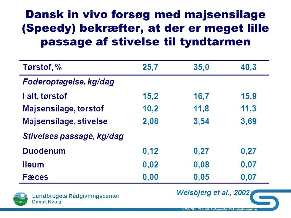 Dansk in vivo forsøg med majsensilage (Speedy) bekræfter, at der er meget lille passage af stivelse til tyndtarmen