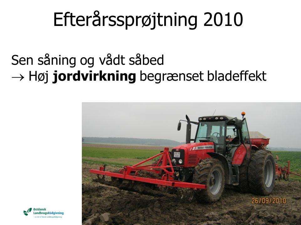 Efterårssprøjtning 2010 Sen såning og vådt såbed  Høj jordvirkning begrænset bladeffekt