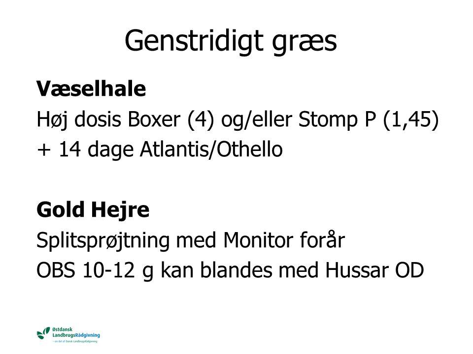 Genstridigt græs Væselhale Høj dosis Boxer (4) og/eller Stomp P (1,45)