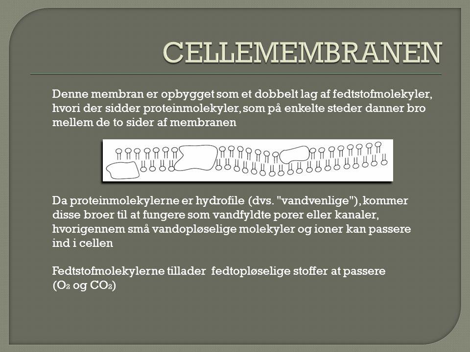 CELLEMEMBRANEN