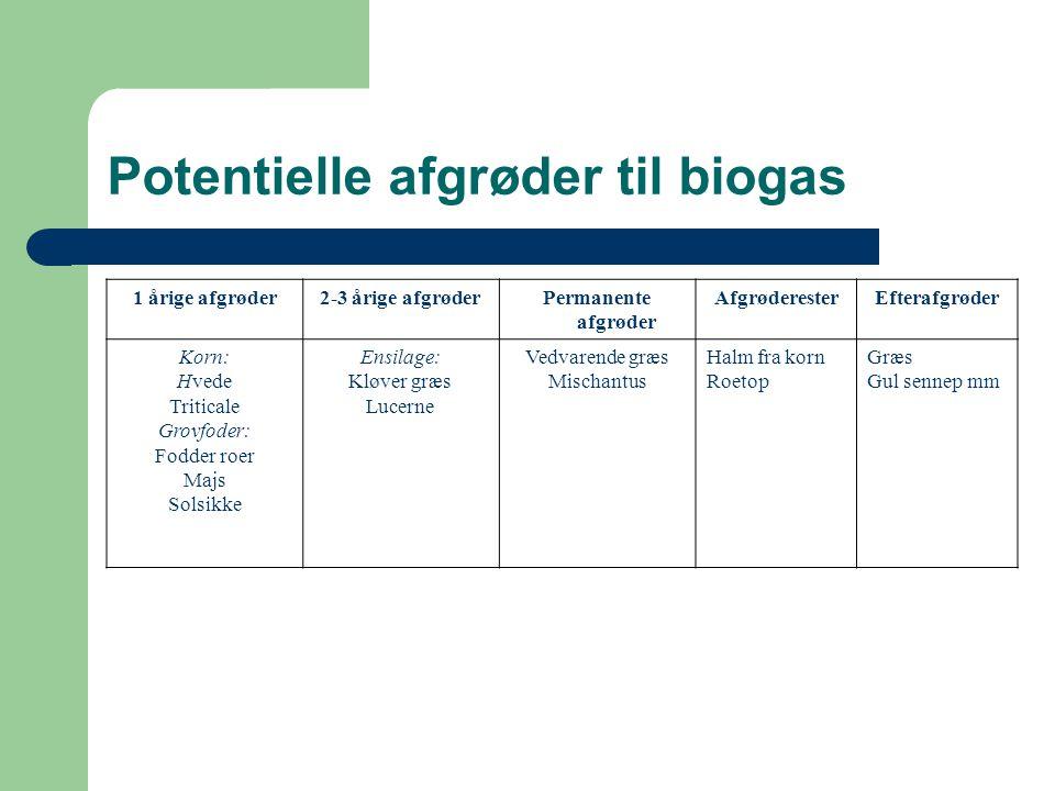 Potentielle afgrøder til biogas