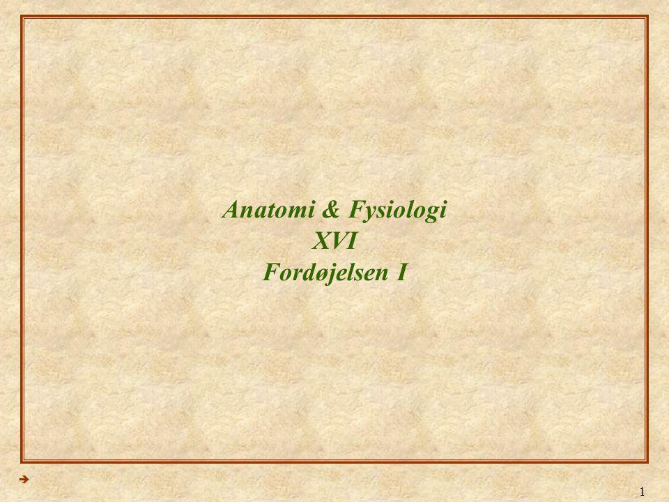Anatomi & Fysiologi XVI Fordøjelsen I