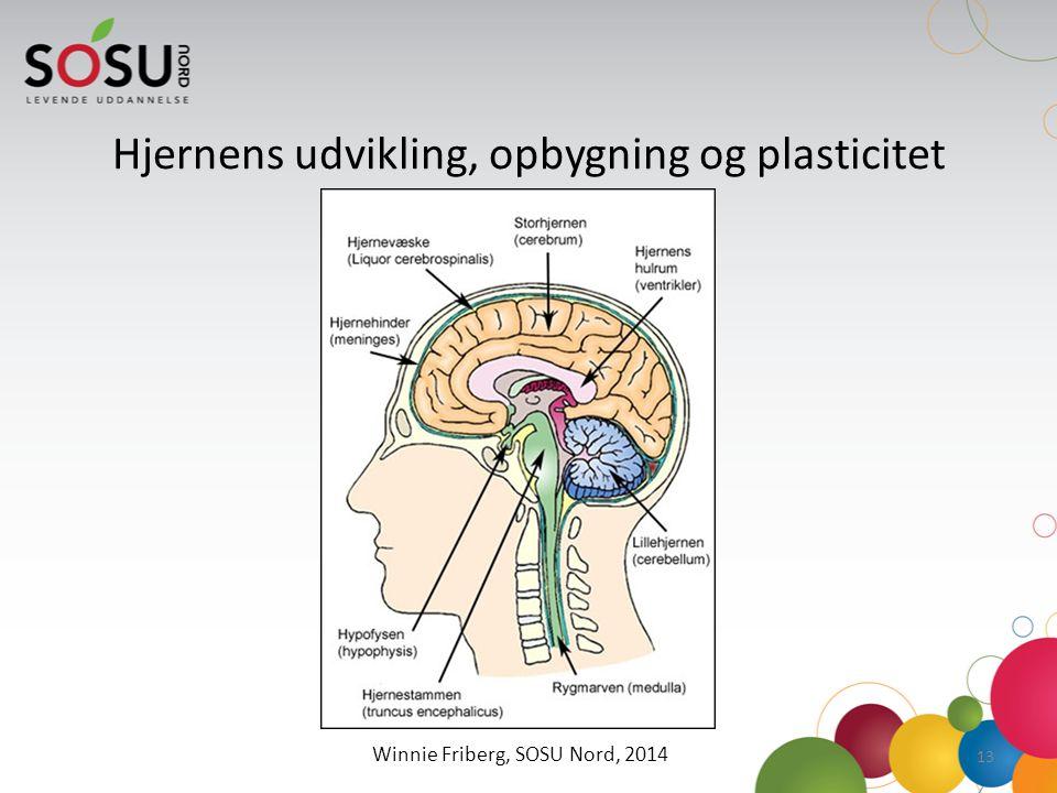 hjernens plasticitet specialpædagogik