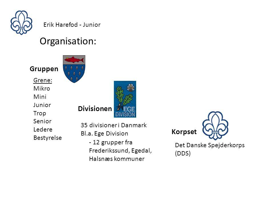 Organisation: Gruppen Divisionen Korpset Erik Harefod - Junior Grene: