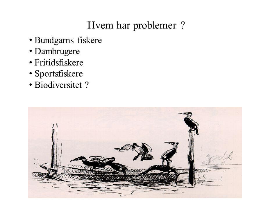 Hvem har problemer Bundgarns fiskere Dambrugere Fritidsfiskere