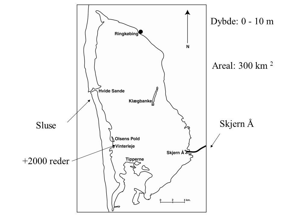 Dybde: 0 - 10 m Areal: 300 km 2 Sluse Skjern Å +2000 reder