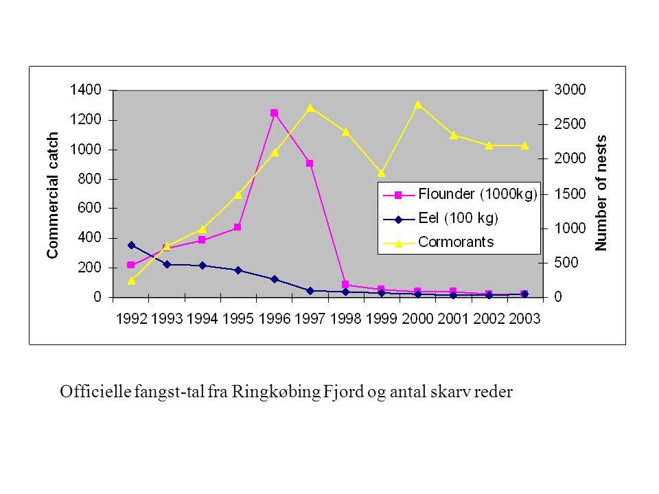 Officielle fangst-tal fra Ringkøbing Fjord og antal skarv reder
