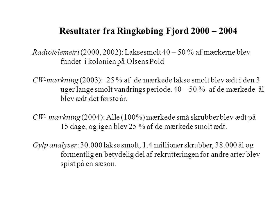 Resultater fra Ringkøbing Fjord 2000 – 2004