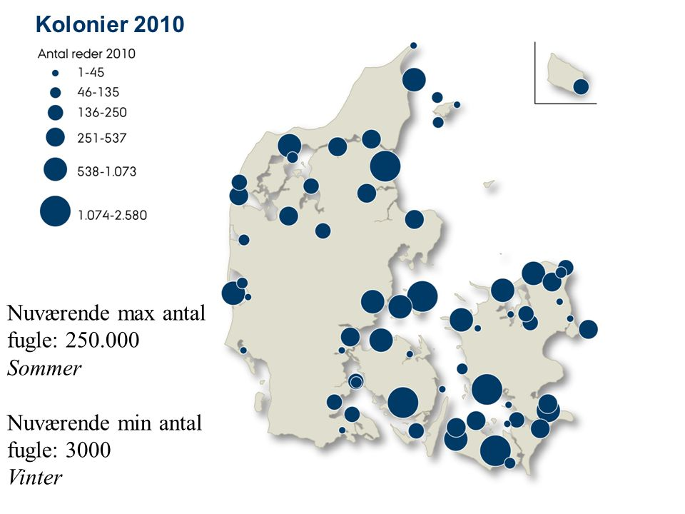 Kolonier 2010 Nuværende max antal fugle: 250.000 Sommer Nuværende min antal fugle: 3000 Vinter