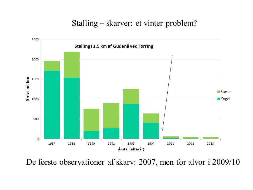 Stalling – skarver; et vinter problem
