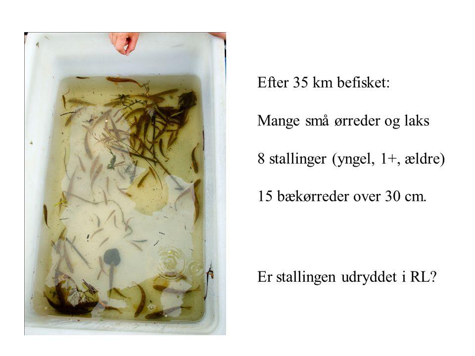 Efter 35 km befisket: Mange små ørreder og laks. 8 stallinger (yngel, 1+, ældre) 15 bækørreder over 30 cm.